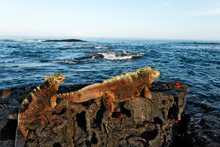 galapagos, šafarek, morska iguana,tihi ocean