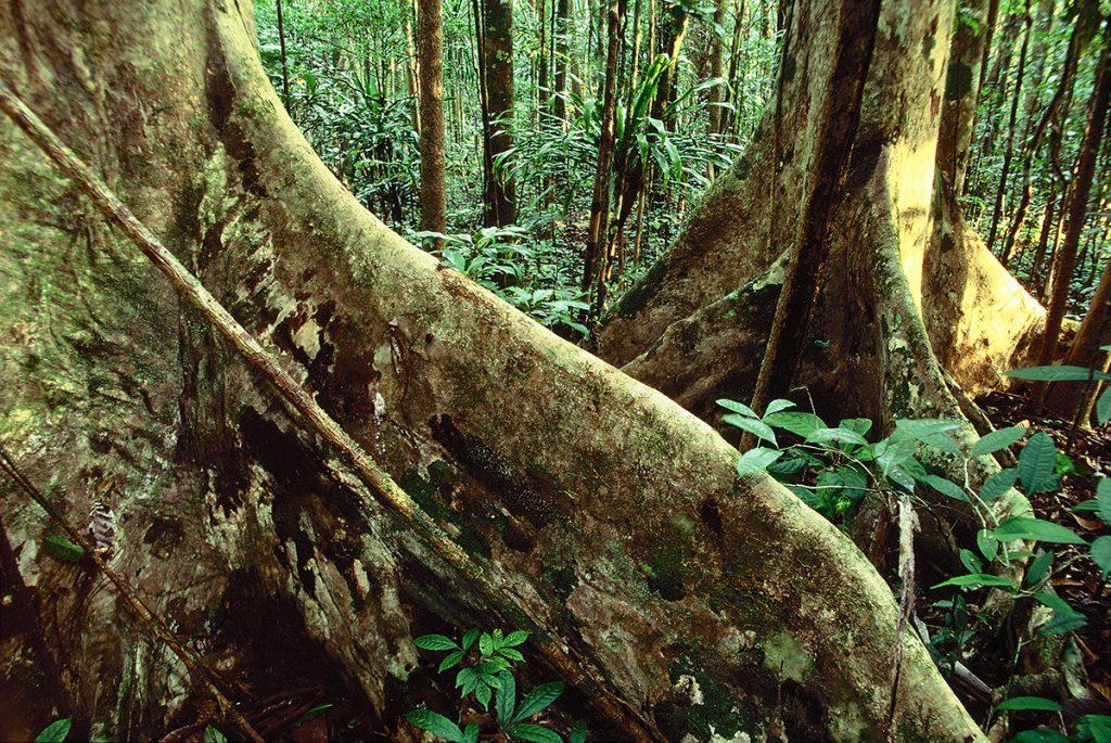 šafarek, madagaskar,zmija,masoala, istraživanje, ekepedicija, biologija, putovanja, džungla, tropska kišna šuma