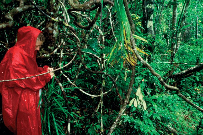 šafarek, madagaskar,zmija,masoala, istraživanje, ekepedicija, biologija, putovanja, džungla
