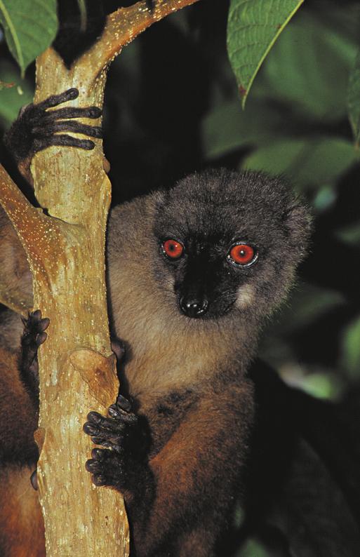 šafarek, madagaskar,zmija,masoala, istraživanje, ekepedicija, biologija, putovanja, džungla, lemur